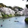 九段下の桜(2)の画像
