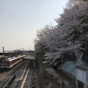 湯の山も桜満開の画像