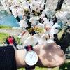 桜とともにの画像