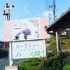 岡山での美人力アップお茶会お申し込みスタートの画像