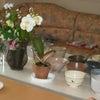 お茶の会の画像