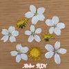 春の押し花   娘からのプレゼントの画像