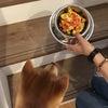 ゴールデンウイークは柴犬シュンちゃんの誕生日‼️の画像