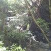川苔山(百尋の滝)の画像