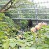 多摩動物公園(おすすめエリア)の画像