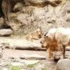 多摩動物公園(意思疎通を感じられた動物)の画像