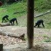 多摩動物公園(印象深かった動物)の画像