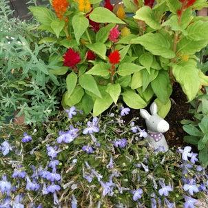 お花屋さんのお花がきれいの画像