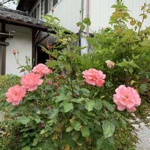 梁山泊の花たち♪の画像