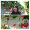 イチゴ狩りと上京の画像