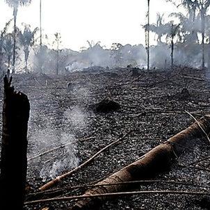 アマゾン森林火災の画像