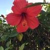 沖縄旅行楽しかったです^^の画像