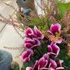 お花の入れ替えの画像