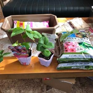 苺 屋内水耕栽培の画像