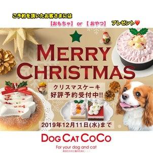 ペット用クリスマスケーキ ご予約受付中!名古屋!の画像