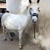 プロヴァンスで乗馬の画像