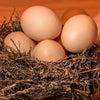 おかげさまで太鼓判をいただいた自然農園こころの卵の画像