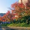 紅葉シーズン真っ只中ですの画像