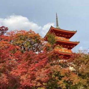 在京都,秋天的景色好美❣️の画像