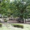 七沢森林公園に行ってきましたの画像