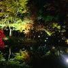 京都の秋の夜。の画像