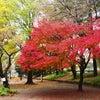 公園の秋の画像