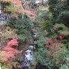 箕面の滝の画像