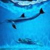 【映画】ドルフィン・マン ジャック・マイヨール、蒼く深い海への画像