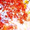 【花と月】楓さんのブログ【写真】の画像