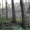 山の見学会に参加しました。の画像