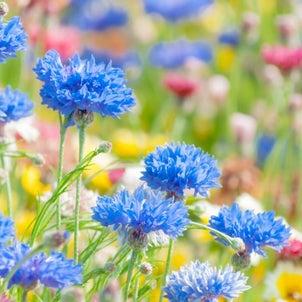 17年越しの「世界でひとつだけの花」の画像