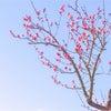 本日は立春。立春の由来とか〜新しい季節にはじめたいお仕事の画像