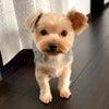 愛犬レオ3歳!カットして来ましたの画像