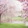 春の訪れと共にの画像