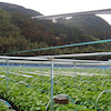 わさび苑 多良岳「収穫体験プログラム(平日予約制)」スタート!の画像