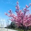 閏年と桜と心臓♡の画像