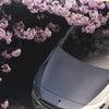 陽射しは春の画像