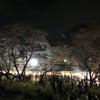 【春】はるさんのブログ【桜】の画像