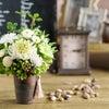 菊の開花前と開花後の画像