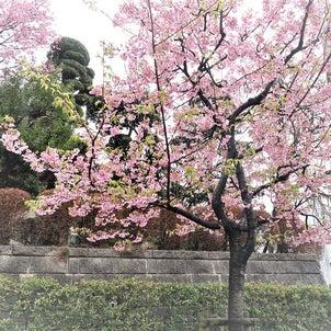 春の香りの画像
