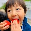 ヘタで分かる!甘くて美味しいいちごの見極め方の画像