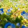 2020春分  意識で変わる空間 お庭シリーズの画像