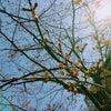 近づく春とコロナの画像