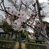 名古屋市みどりケ丘公園墓地 桜の画像