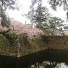 桜舞い散る・・・お花見できないつらさの画像