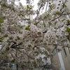 4月のマンスリーメッセージ☆リフレ・デ・マーチの画像
