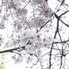 ☆カラフルホロネイル☆の画像