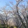 桜とうどんの画像