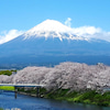富士とサクラの画像