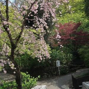 春なのに…の画像